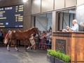 Review: 2020 Easter Yearling Sale (Day 1) (Race Video, Finis ...